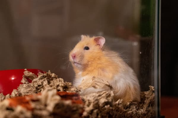 How Much Bedding Should A Hamster Have, Can You Use Shredded Paper For Hamster Bedding